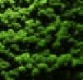 Raumklima Mooswaende Dekoration Innenarchitektur7 - Natürliche Wandelemente - <br/>als schöne Dekoration und für ein angenehmes Raumklima